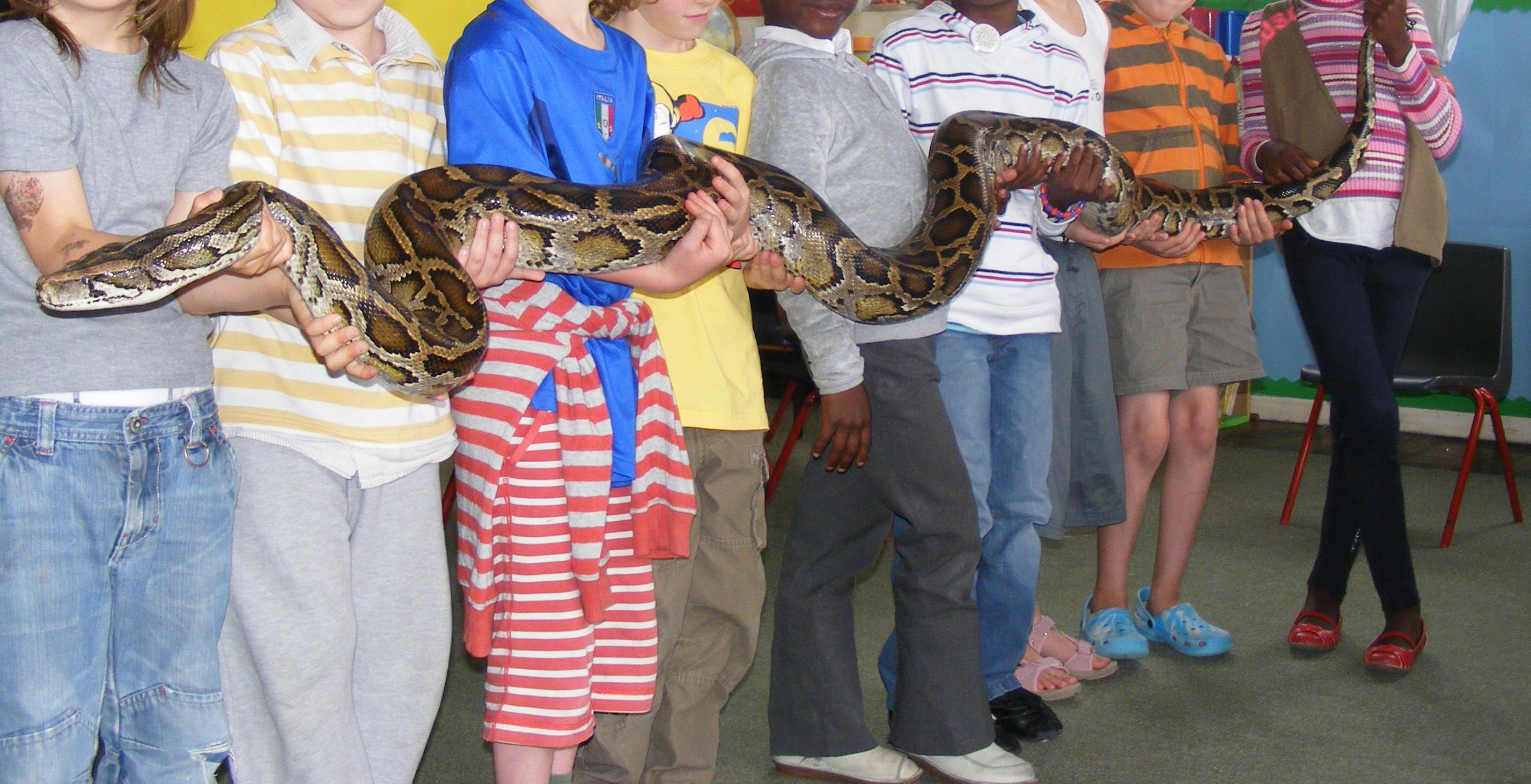 Animal Shows